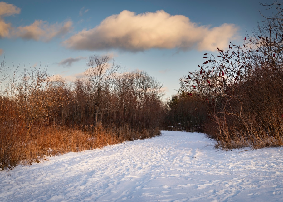 Winter Walk Photography Art | Elizabeth Stanton Photography