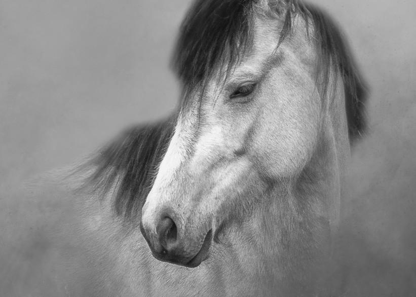 Buckskin Mare   (B&W Option) Photography Art | Shelly Priest Photography