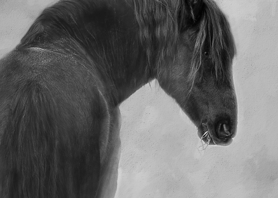 Dark Horse Photography Art | Shelly Priest Photography