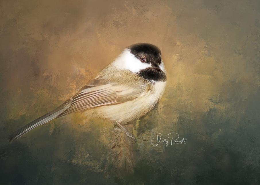 Sunny Chickadee Photography Art | Shelly Priest Photography