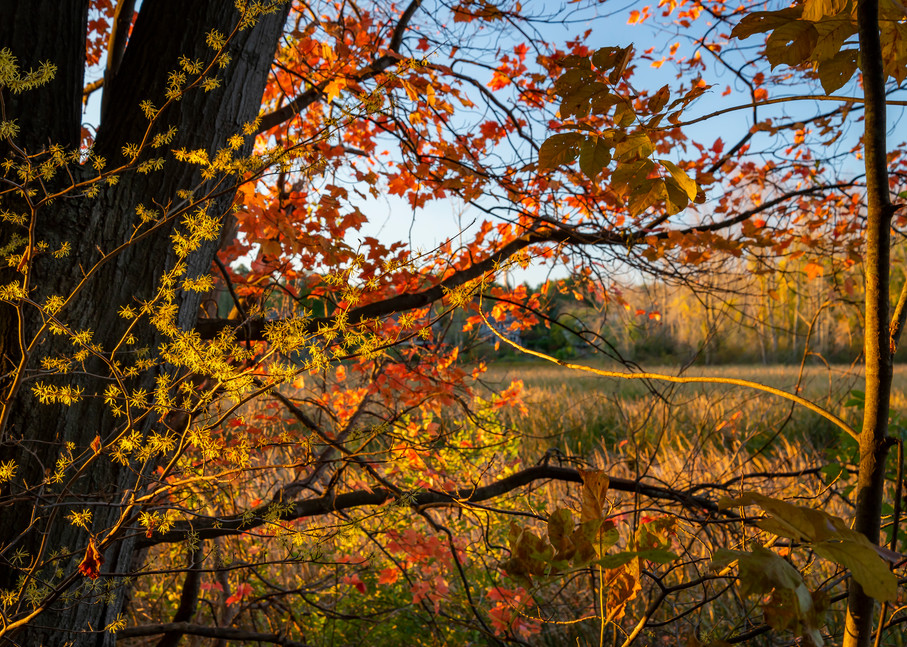 Autumn Sunrise Photography Art | Elizabeth Stanton Photography
