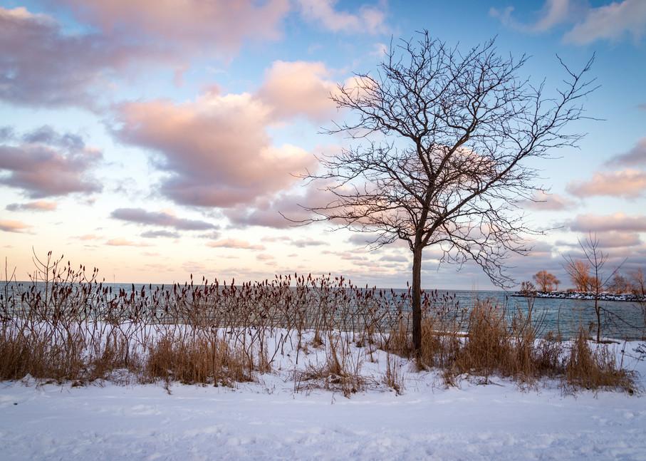 Sumac And Snow Photography Art | Elizabeth Stanton Photography