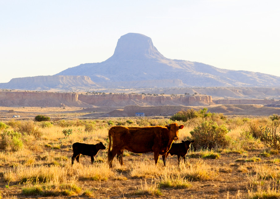 Cows At Dawn - A Fine Art Photograph by Marcos R. Quintana