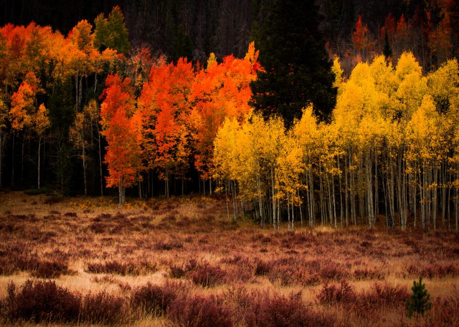Aspen Autumn Fall Colors Wall Art Home Decor Landscape