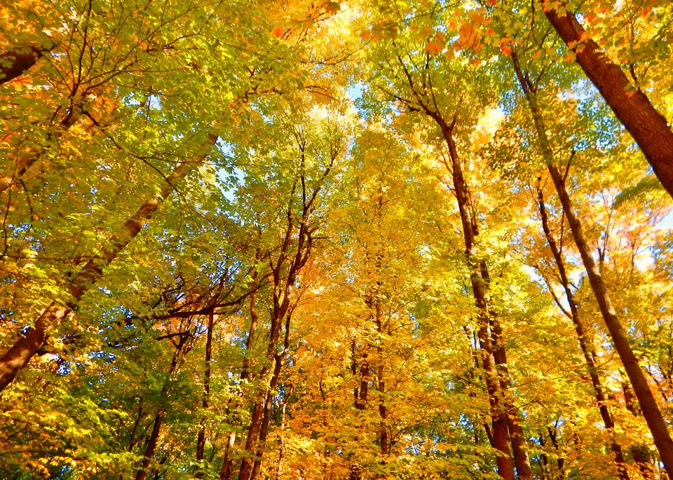 Fall Magic Minnetonka Trail Photography Art | CJ Harding