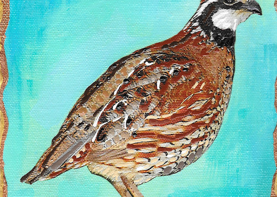 Bobwhite Quail Art | Channe Felton Fine Art