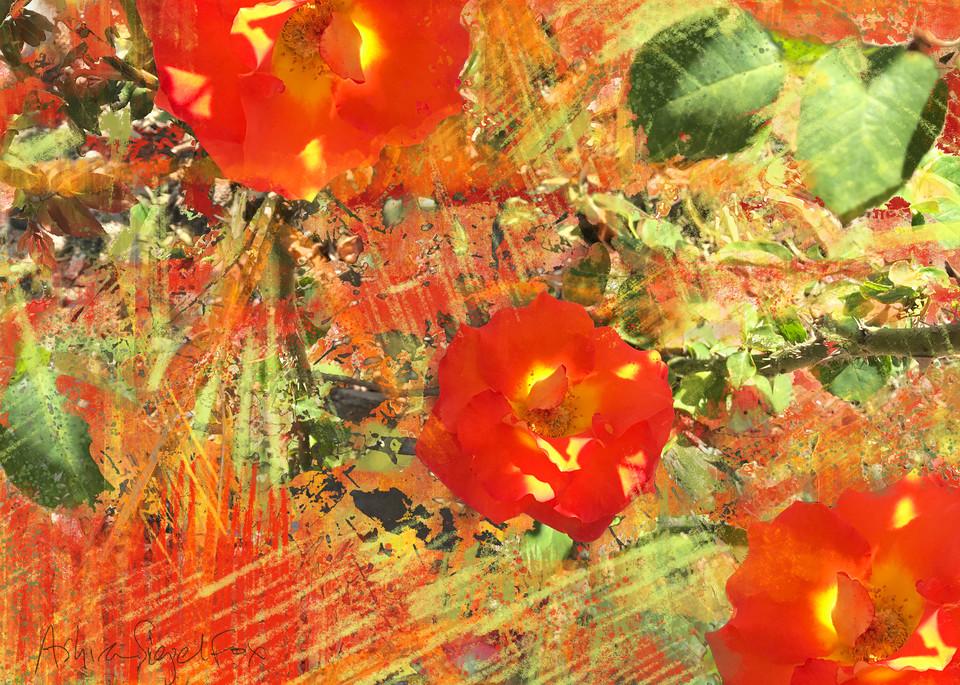 Red Hibiscus Art   Ashira Siegel Fox