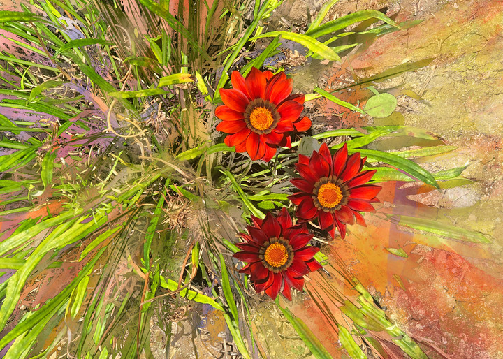 Three Red Suns  Art   Ashira Siegel Fox