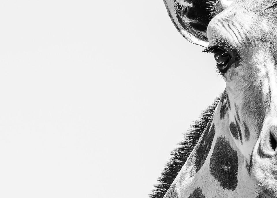 wildlife, giraffe, endangered, ancient