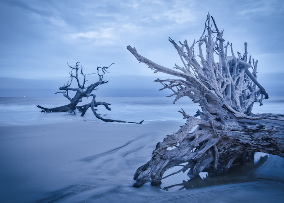Soft Morning Light at Driftwood Beach   Susan J Photography