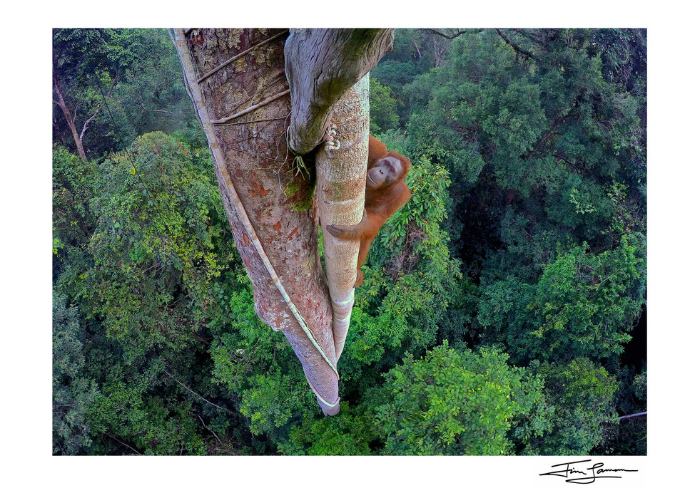 Wildlife Photographer of the Year Winning Image.