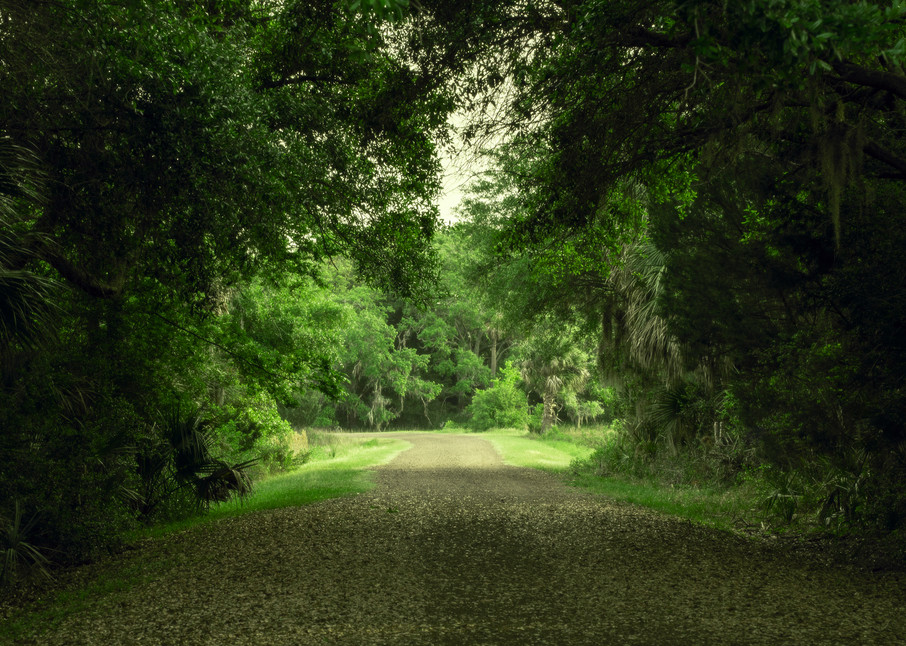 Road to Ibis Pond