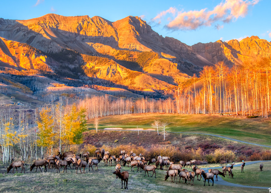 Elk Herd In Mountain Village Photography Art | Peter Batty Photography
