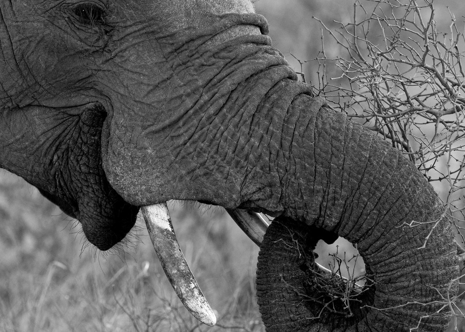 Elephant in South Africa by photographer Rob Shanahan