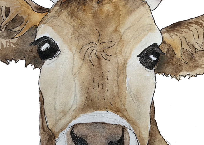 How Now Brown Cow Edited 3 Art   Color Splash Ranch