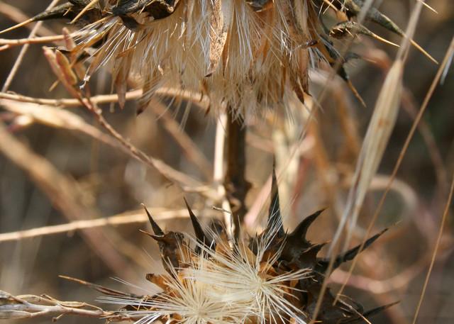 heat, harvest, season, brown, morbidbeauty, jackierobbinsstudio, photographicprints, buyartonline