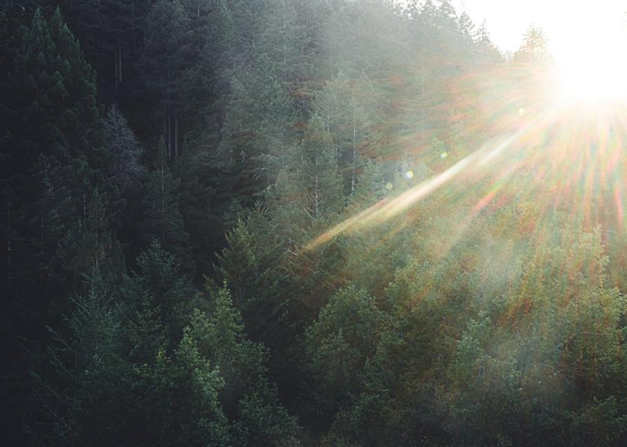 Kaleidoscope Trees