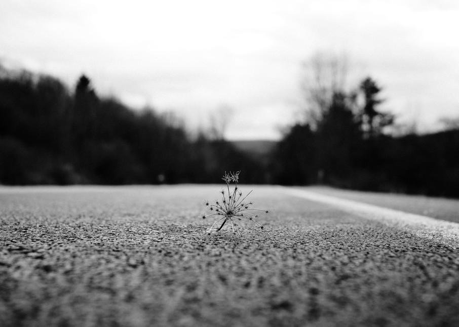 Nightmare Photography Art | LenaDi Photography LLC