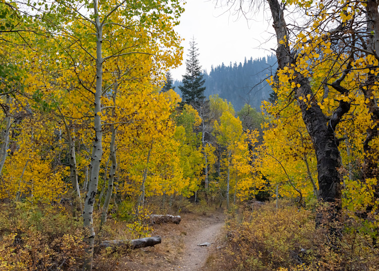 Path Through Autumn 2 Photography Art | Leiken Photography