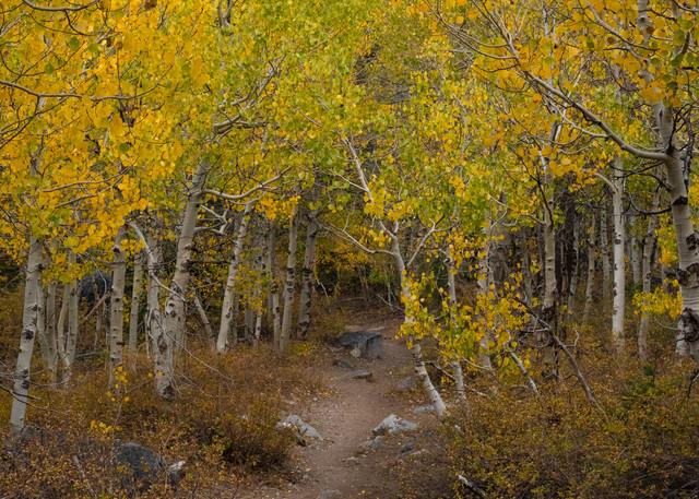 Path Through Autumn 1 Photography Art | Leiken Photography