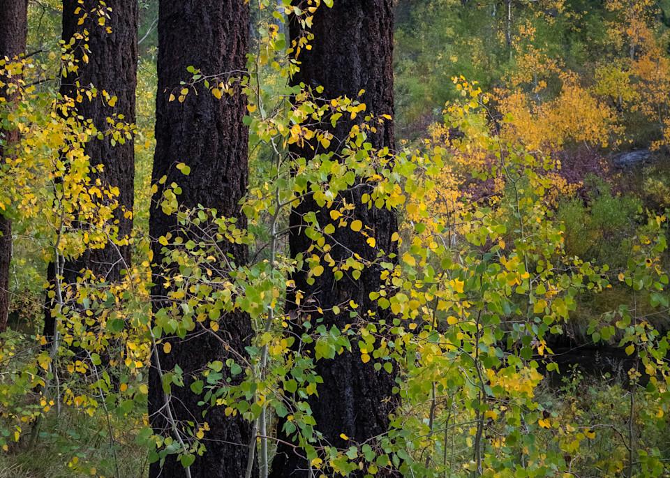 Fall Grove 2 Photography Art   Leiken Photography
