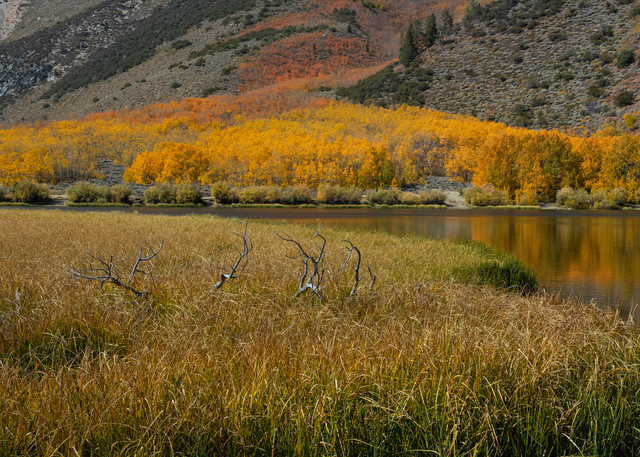 North Lake Tall Photography Art | Leiken Photography