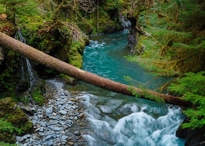East Fork Quinault River, Olympic National Park, Washington, 2016