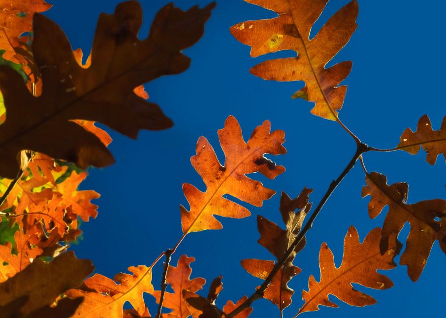 Autumn Beam