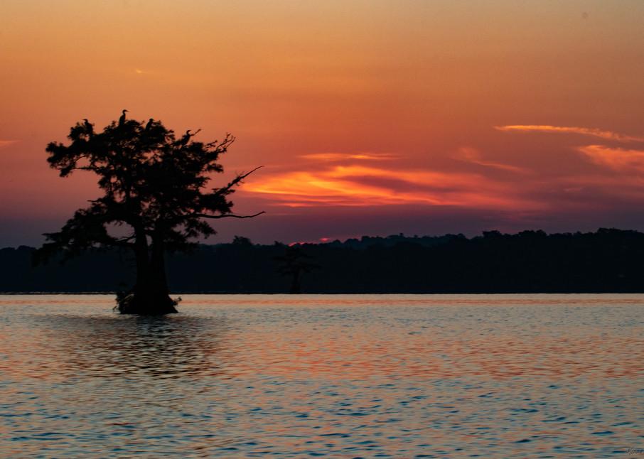 Egret Tree Sunrise     8459 Rlt20 Art | Koral Martin Fine Art Photography