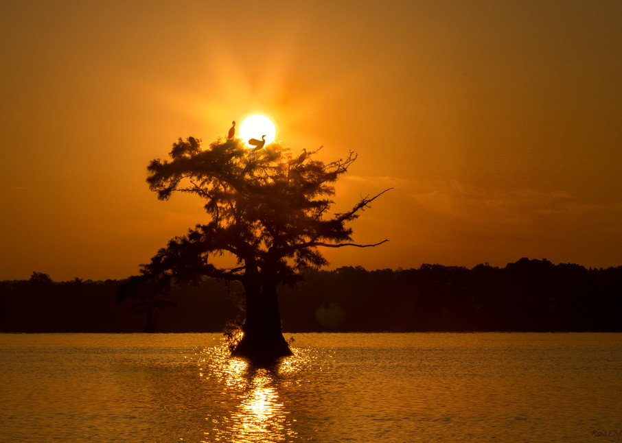 Sunsize Cormorant Tree  Tm  8534 Rlt20 Art   Koral Martin Fine Art Photography