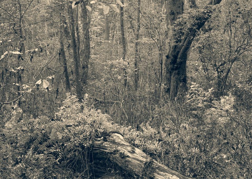 Nature Bw 1459 Photography Art | Dan Chung Fine Art
