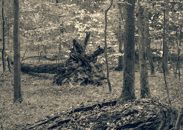 Nature Bw 1478 Photography Art | Dan Chung Fine Art