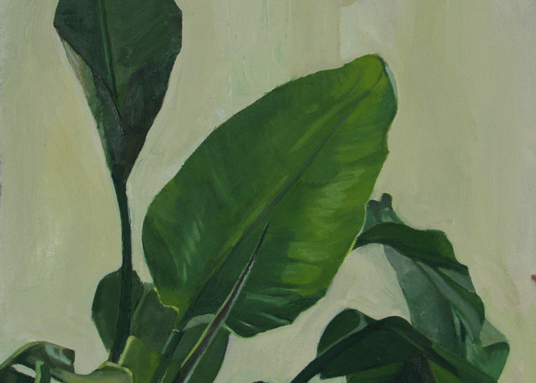Study Of Leaves Art | Jono Wright Art
