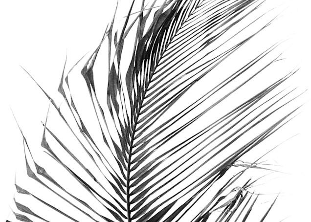 Coconut Tree Branch Photography Art | David Louis Klein