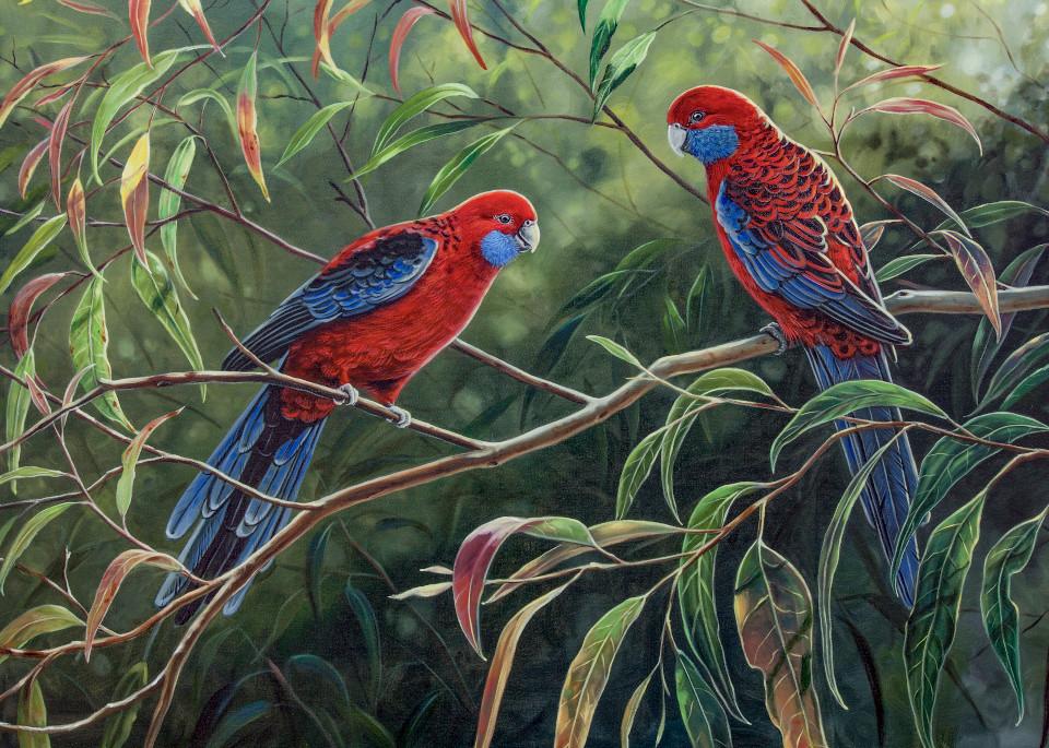 Crimson Rosellas - In the Dappled Light