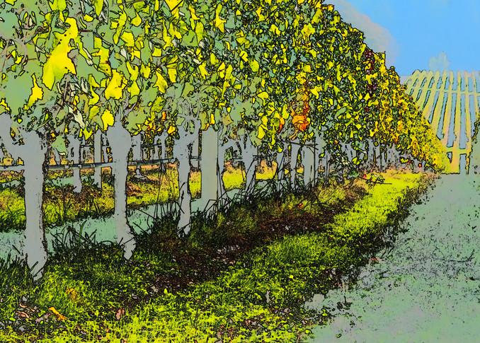 Vineyard Lines