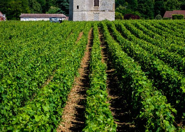 Clos du Vougeot Vineyard, France