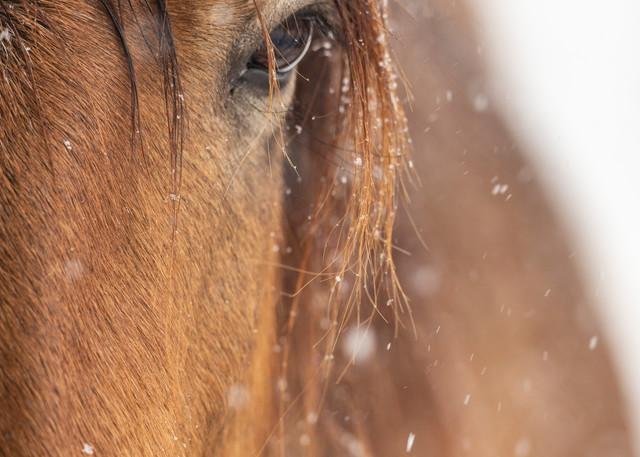 Snow Wonder Photography Art | Deb Little Photography