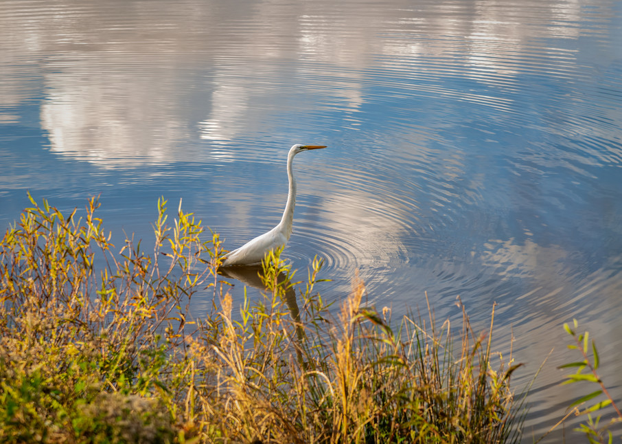 Bird Fishing In Autumn 4 Photography Art | Grace Fine Art Photography by Beth Sheridan