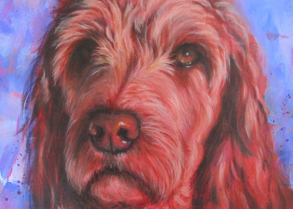 Irish Doodle Art Print Art | Lesley McVicar Art