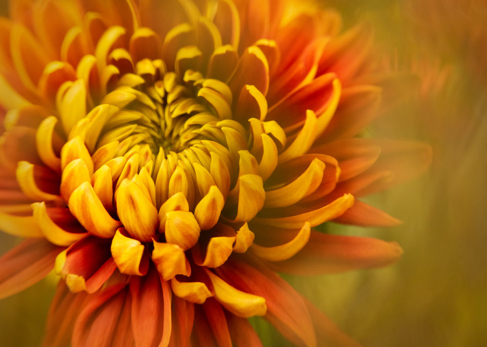 Red And Yellow 2 Photography Art | Grace Fine Art Photography by Beth Sheridan