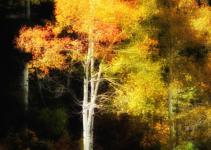 Aspen Glow Photography Art   Kathleen Messmer Photography
