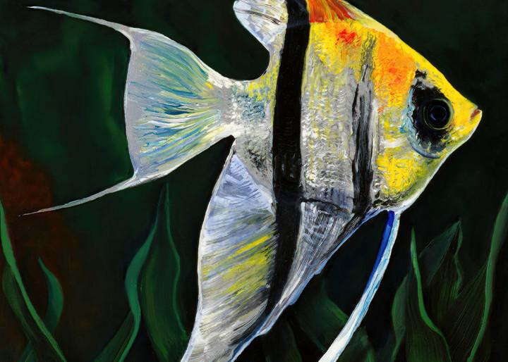 Angelfish Sunny Side Up