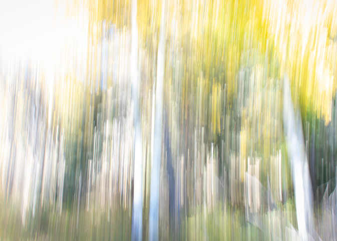 Melting Aspens Photography Art | Kathleen Messmer Photography