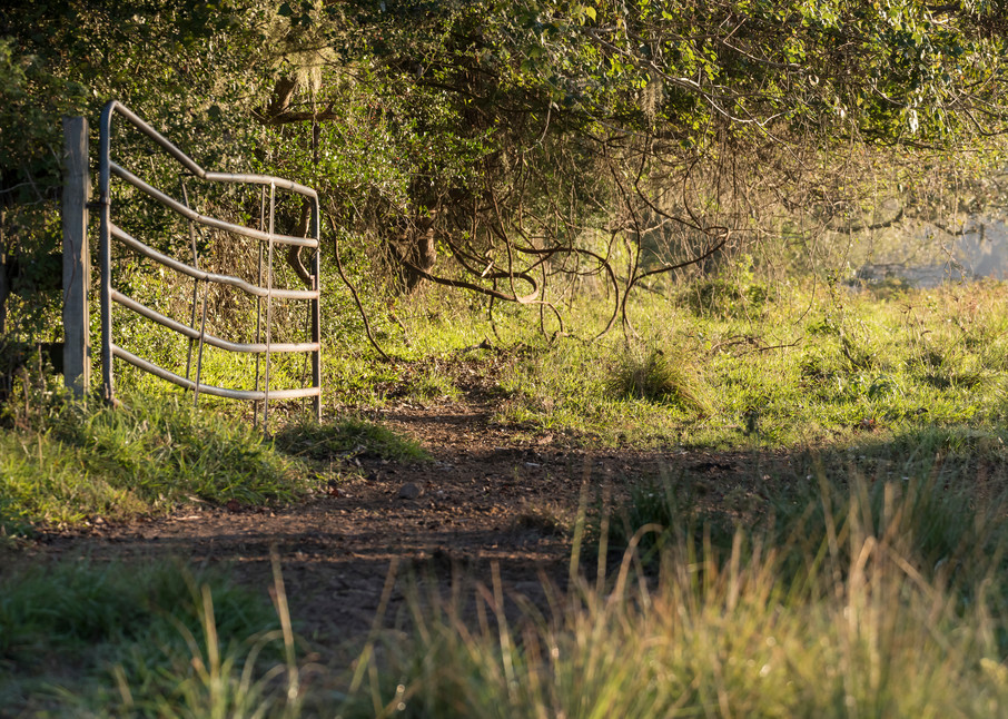 Pasture Fence Gate Sunrise, Damon, Texas