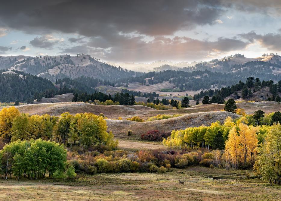 Whitetail Meadow Photography Art | Craig Edwards Fine Art Images