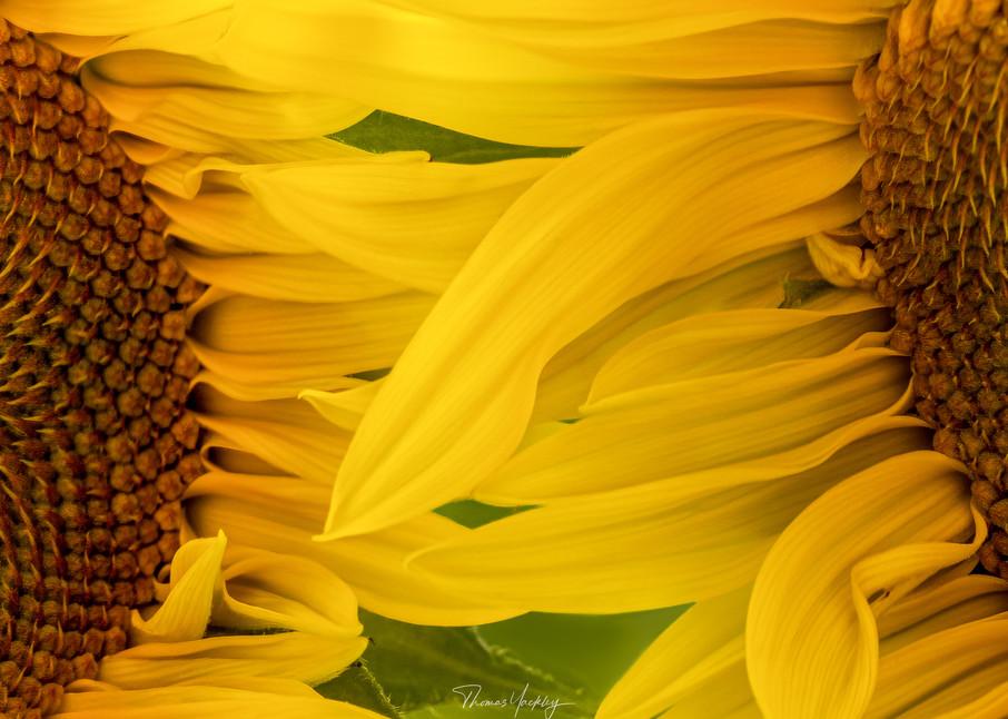 Sweet Caress Photography Art   Thomas Yackley Fine Art Photography