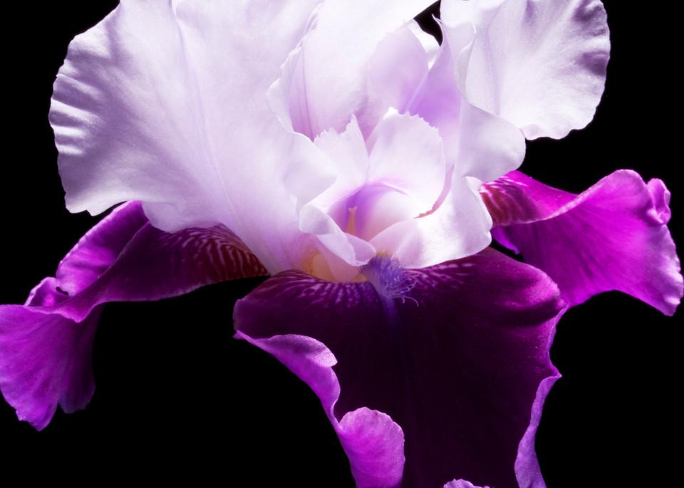 Iris cropped