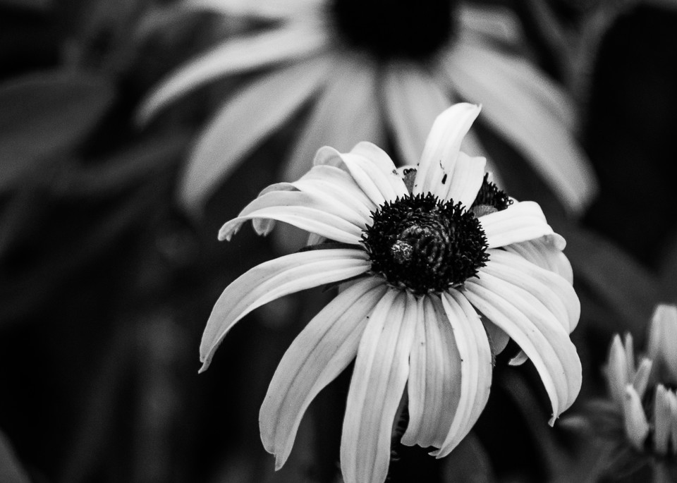 B&W Botanicals #13 Photography Art | Ted Glasoe, Artist