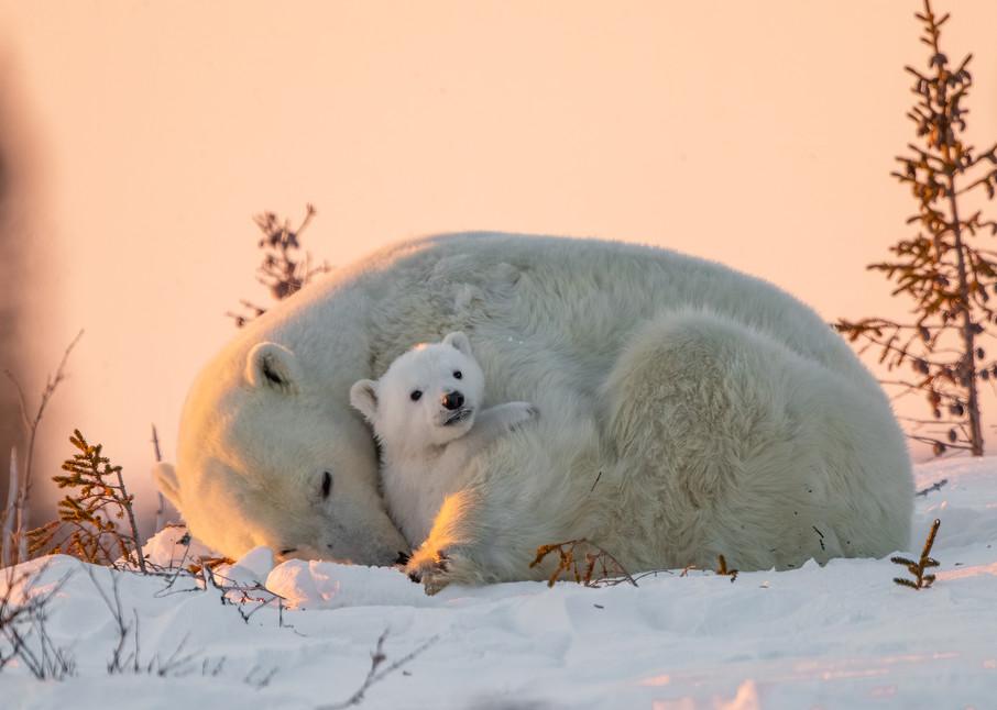 Bear Hug Photography Art | danieldauria